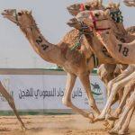 بالمواعيد والرابط..بدء التسجيل بكأس اللجنة الأولمبية العربية السعودية للهجن